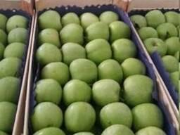 Фрукты Сербия- виноград груша яблоко - фото 5