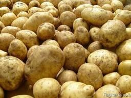 Картофель белый 5 в сетках по 25-30 кг
