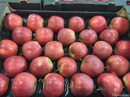 Polish apples, La-Sad - фото 4