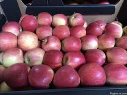 Продам польские яблоки