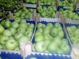 Продаю яблоки оптом! - фото 2