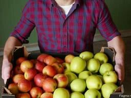 Свежие яблоки от производителя - фото 4
