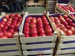 Яблоки из Польши! Apples from Poland! - фото 5