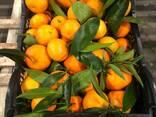 Greek mandarin - photo 2