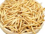 High Protein Dried Mealworms for chicken feed formula - фото 2