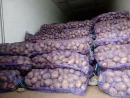Картофель оптом Беларусь - фото 5