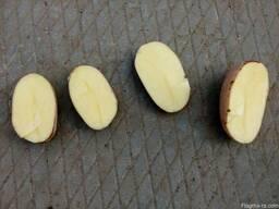 Картофель оптом Беларусь - фото 6
