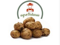 Krompir iz Belorusije плодоовощная продукция