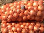 Лук оптом экспорт (Belarus) - фото 1