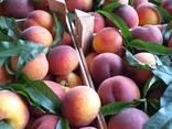 Нектарин, персик, косточковые Сербия-оптом!!! - фото 2