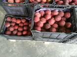 Персик нектарин Греция - фото 5