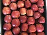 Продам польские яблоки - фото 3
