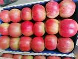 Продаю яблоки оптом! - фото 3