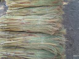 Sorghum for the production of brooms