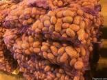 - Свеж кромпир: Бреезе, МанифестСвежий картофель - фото 5