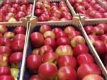 Яблоки из Польши! Apples from Poland! - фото 7