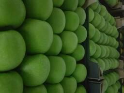 Яблоки польские - фото 4