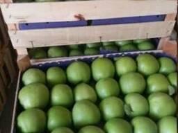 Яблоко сорт Муцу Сербия - фото 2