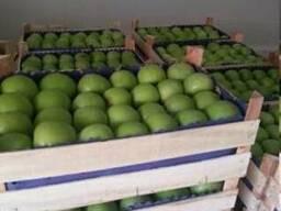 Яблоко сорт Муцу Сербия - фото 3